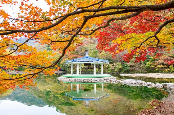 Korea_Naejangsan National Park_560X373
