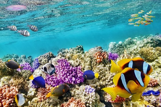 Australia_Great Barrier Reef2_560X373
