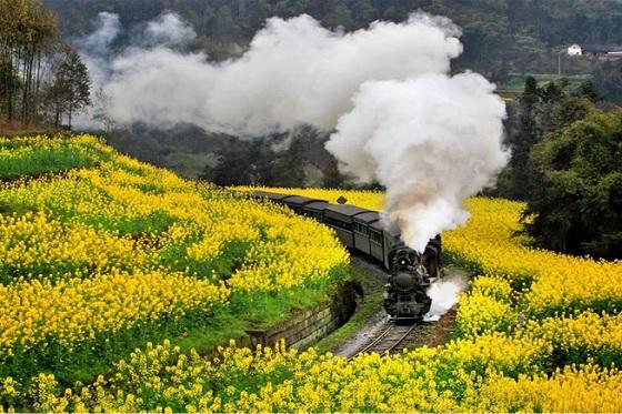 Steam train560x373