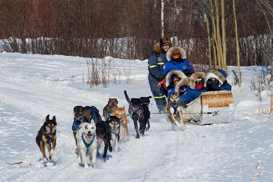 Canada_Dog Sledding Tour_560X373