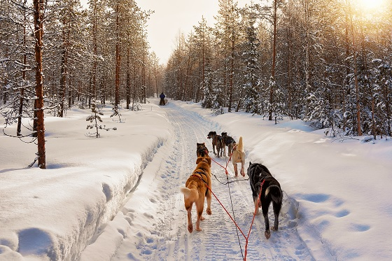 Norway_Dog-Sledding_560X373