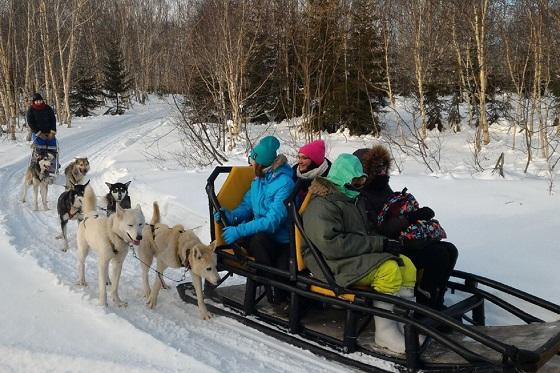 Husky Dog Farm & Sledge Driving 560x373